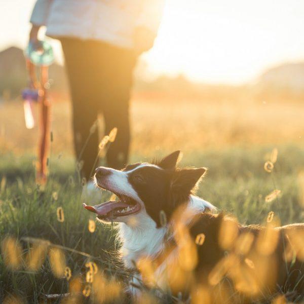 Frau geht mit ihrem Hund auf einer Wiese spazieren