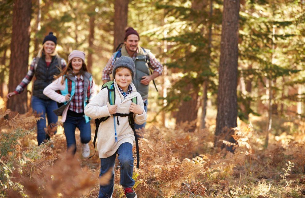 Familie mit zwei Kindern wandern im Harzwald