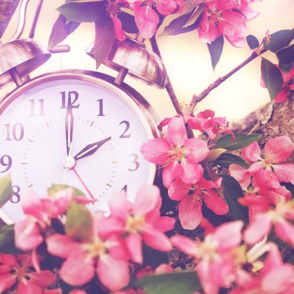 Wecker umgeben von rosaroten Blumen