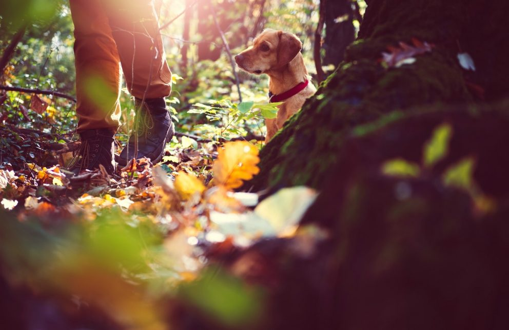 Wanderer mit Hund im Wald bei Sonnenschein