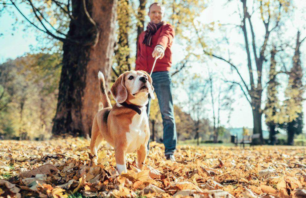 Mann mit Rotem Pullover geht mit Hund spazieren