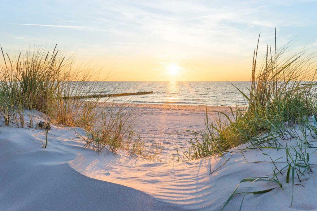 Schilf im Sand am Strand