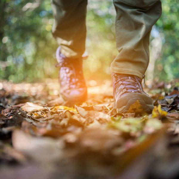 Wanderschuhe im Wald auf Laub