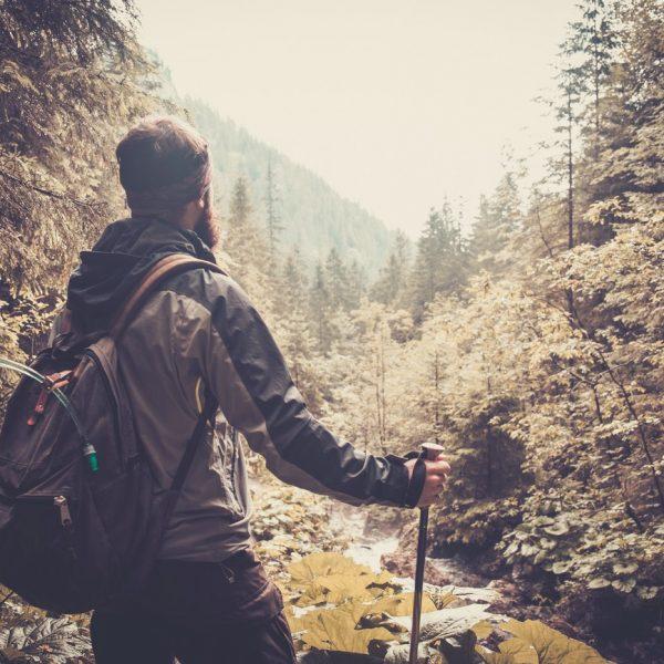 Wanderer im Harzwald